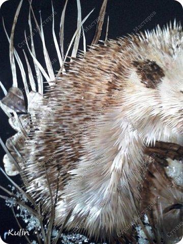 грустный голодный ёж... фото 2