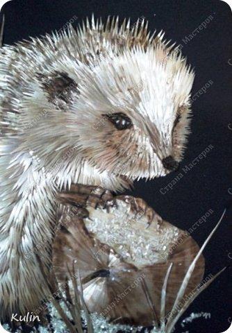 грустный голодный ёж... фото 3