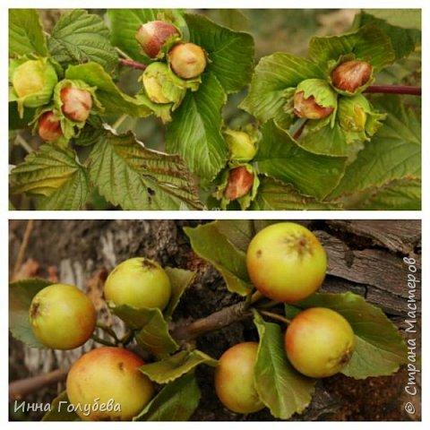 Привет всем жителям страны! Сегодня я к вам с волшебными орешками и молодильными яблочками) фото 1