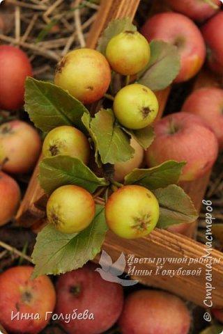 Привет всем жителям страны! Сегодня я к вам с волшебными орешками и молодильными яблочками) фото 17