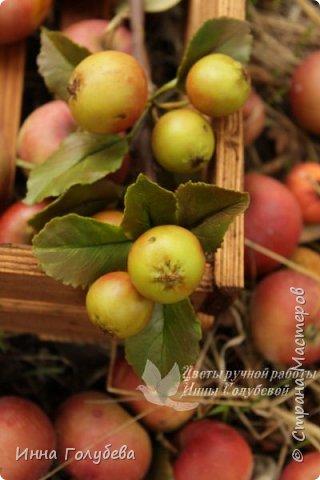 Привет всем жителям страны! Сегодня я к вам с волшебными орешками и молодильными яблочками) фото 11