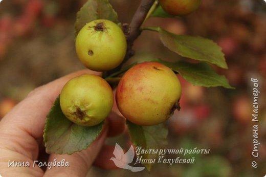 Привет всем жителям страны! Сегодня я к вам с волшебными орешками и молодильными яблочками) фото 16
