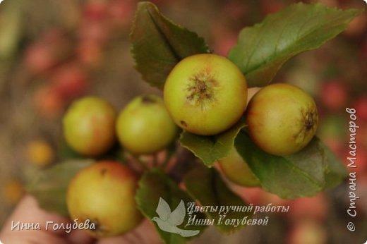 Привет всем жителям страны! Сегодня я к вам с волшебными орешками и молодильными яблочками) фото 15