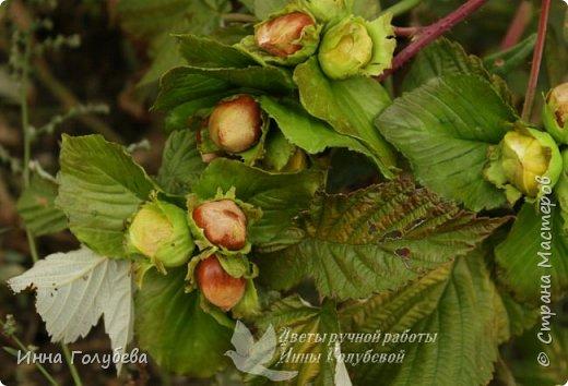Привет всем жителям страны! Сегодня я к вам с волшебными орешками и молодильными яблочками) фото 2