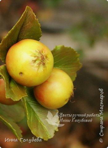 Привет всем жителям страны! Сегодня я к вам с волшебными орешками и молодильными яблочками) фото 14