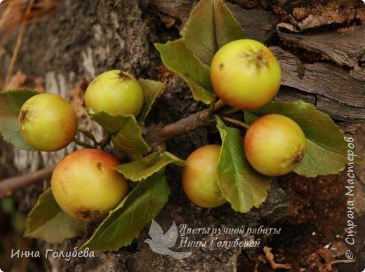 Привет всем жителям страны! Сегодня я к вам с волшебными орешками и молодильными яблочками) фото 13