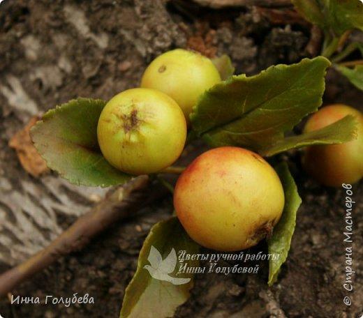 Привет всем жителям страны! Сегодня я к вам с волшебными орешками и молодильными яблочками) фото 12