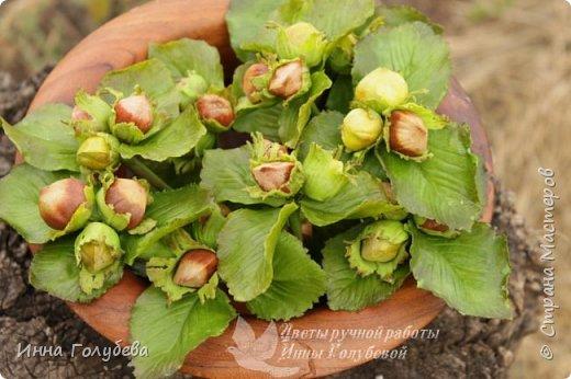 Привет всем жителям страны! Сегодня я к вам с волшебными орешками и молодильными яблочками) фото 4