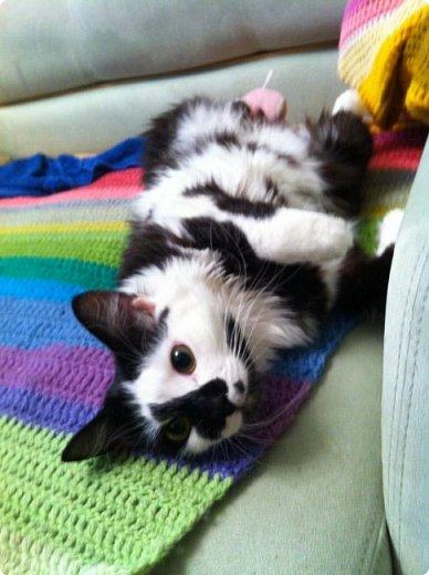 Всем привет!!!! Знакомьтесь, мои кошки. Тося, Степа, Вася, Тиша. фото 28