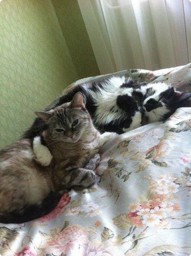 Всем привет!!!! Знакомьтесь, мои кошки. Тося, Степа, Вася, Тиша. фото 29