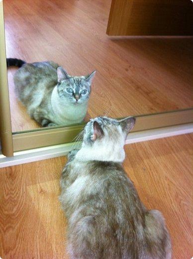 Всем привет!!!! Знакомьтесь, мои кошки. Тося, Степа, Вася, Тиша. фото 30