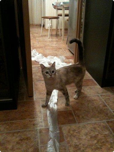 Всем привет!!!! Знакомьтесь, мои кошки. Тося, Степа, Вася, Тиша. фото 31
