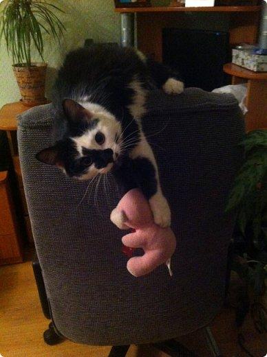 Всем привет!!!! Знакомьтесь, мои кошки. Тося, Степа, Вася, Тиша. фото 32