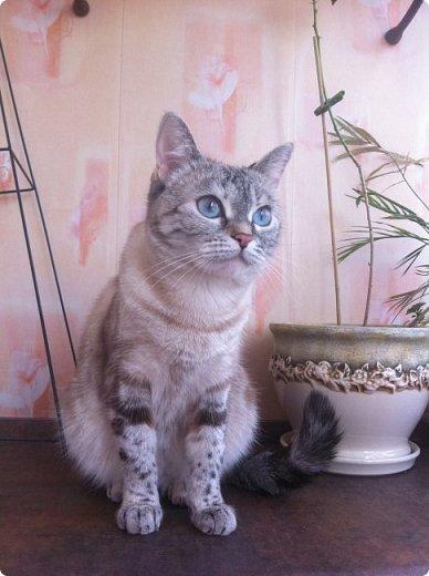 Всем привет!!!! Знакомьтесь, мои кошки. Тося, Степа, Вася, Тиша. фото 2