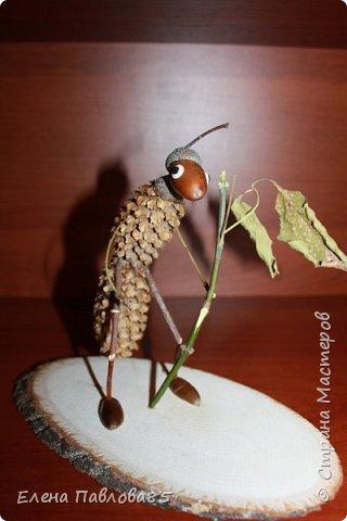 Осенний муравей фото 2