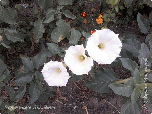 Здравствуйте дорогие мастера и мастерицы!!!!Слепилась вот такая осенняя орхидейка. фото 15