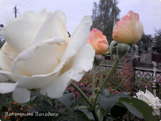 Здравствуйте дорогие мастера и мастерицы!!!!Слепилась вот такая осенняя орхидейка. фото 12