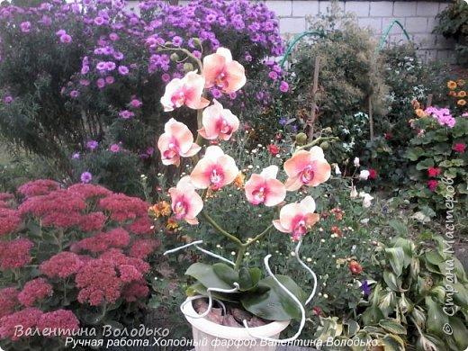 Здравствуйте дорогие мастера и мастерицы!!!!Слепилась вот такая осенняя орхидейка. фото 2