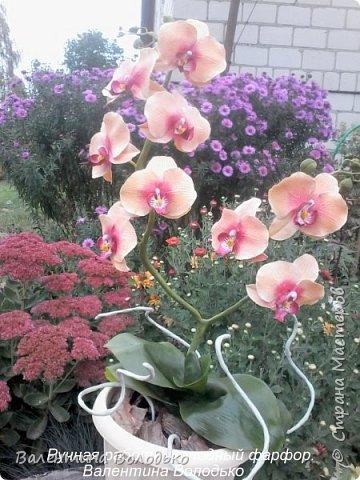 Здравствуйте дорогие мастера и мастерицы!!!!Слепилась вот такая осенняя орхидейка. фото 5