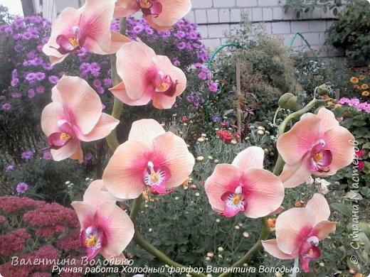 Здравствуйте дорогие мастера и мастерицы!!!!Слепилась вот такая осенняя орхидейка. фото 1