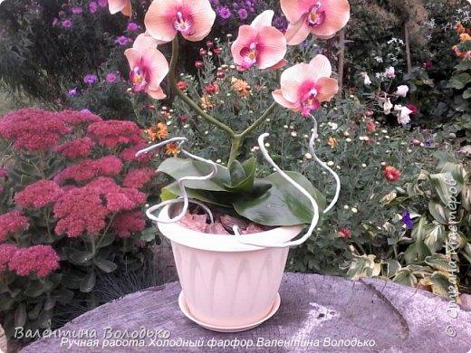 Здравствуйте дорогие мастера и мастерицы!!!!Слепилась вот такая осенняя орхидейка. фото 4