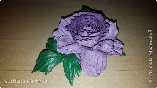 Есть роза дивная: она Пред изумлённою Киферой Цветёт, румяна и пышна, Благословенная Венерой. Вотще Киферу и Пафос Мертвит дыхание мороза, Блестит между минутных роз Неувядаемая роза…  (А.С.Пушкин) фото 14