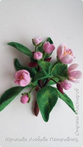 Веточка яблони в цвету.  фото 3