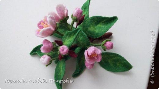 Веточка яблони в цвету.  фото 1