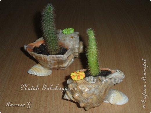 Вторая жизнь морских ракушек фото 1