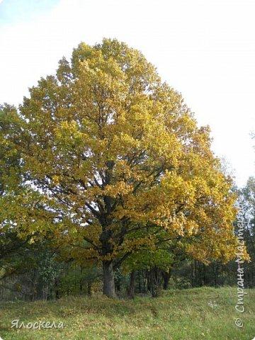 Сегодня осень побаловала нас теплым и солнечным деньком. На радостях отправились на природу- побродить по лесу и полюбоваться местными пейзажами. Дорога к реке. фото 3