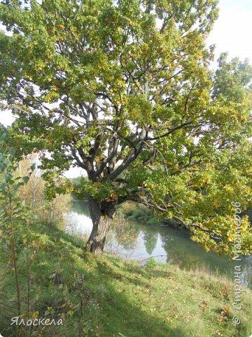 Сегодня осень побаловала нас теплым и солнечным деньком. На радостях отправились на природу- побродить по лесу и полюбоваться местными пейзажами. Дорога к реке. фото 11