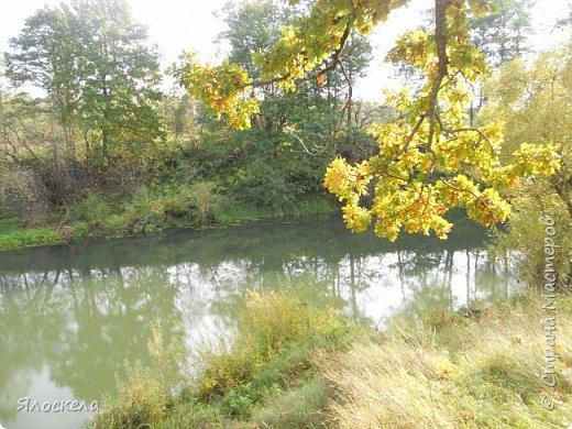 Сегодня осень побаловала нас теплым и солнечным деньком. На радостях отправились на природу- побродить по лесу и полюбоваться местными пейзажами. Дорога к реке. фото 13