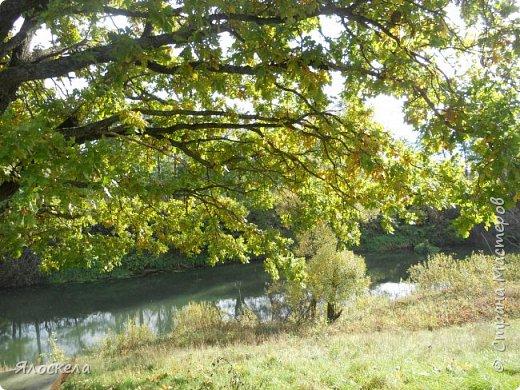 Сегодня осень побаловала нас теплым и солнечным деньком. На радостях отправились на природу- побродить по лесу и полюбоваться местными пейзажами. Дорога к реке. фото 15