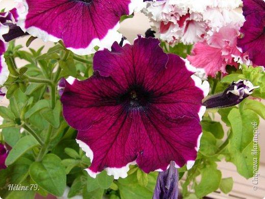 Цветы, как люди, на добро щедры  И, щедро нежность людям отдавая,  Они цветут, сердца отогревая,  Как маленькие теплые костры...  (Ким Жанэ)    фото 10