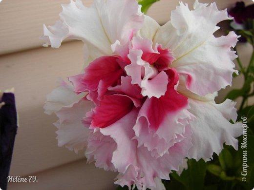 Цветы, как люди, на добро щедры  И, щедро нежность людям отдавая,  Они цветут, сердца отогревая,  Как маленькие теплые костры...  (Ким Жанэ)    фото 9
