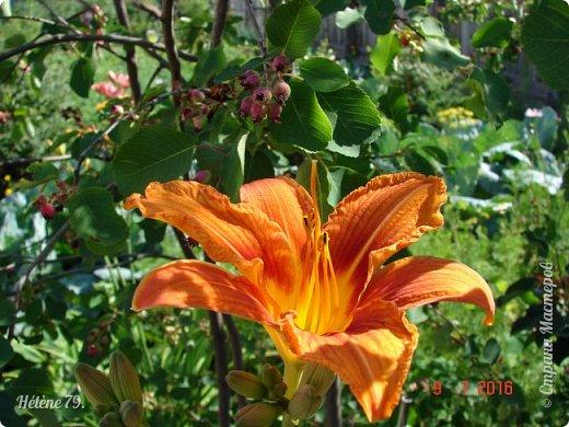 Цветы, как люди, на добро щедры  И, щедро нежность людям отдавая,  Они цветут, сердца отогревая,  Как маленькие теплые костры...  (Ким Жанэ)    фото 13