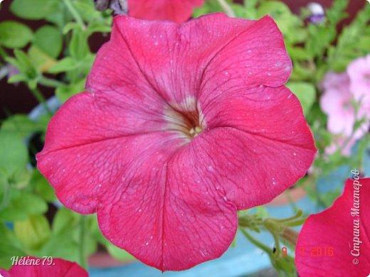 Цветы, как люди, на добро щедры  И, щедро нежность людям отдавая,  Они цветут, сердца отогревая,  Как маленькие теплые костры...  (Ким Жанэ)    фото 8