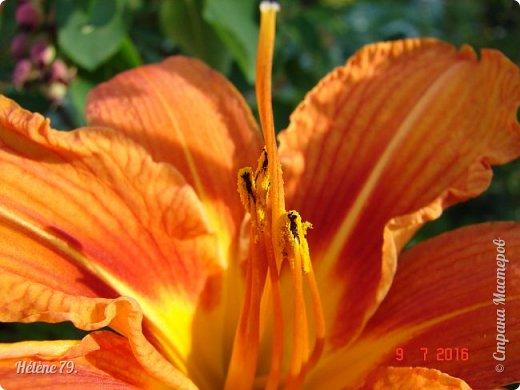 Цветы, как люди, на добро щедры  И, щедро нежность людям отдавая,  Они цветут, сердца отогревая,  Как маленькие теплые костры...  (Ким Жанэ)    фото 15