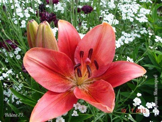 Цветы, как люди, на добро щедры  И, щедро нежность людям отдавая,  Они цветут, сердца отогревая,  Как маленькие теплые костры...  (Ким Жанэ)    фото 19