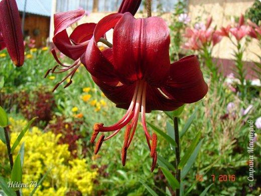 Цветы, как люди, на добро щедры  И, щедро нежность людям отдавая,  Они цветут, сердца отогревая,  Как маленькие теплые костры...  (Ким Жанэ)    фото 21
