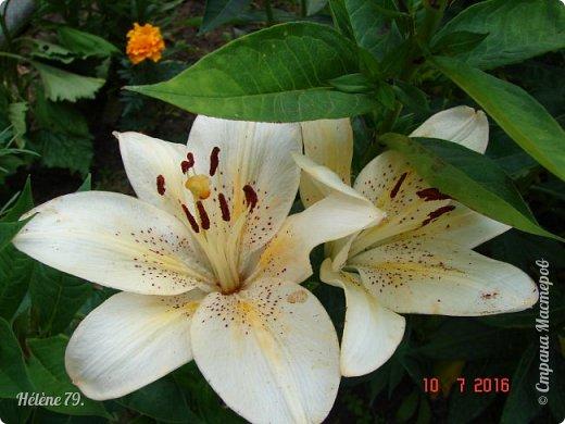 Цветы, как люди, на добро щедры  И, щедро нежность людям отдавая,  Они цветут, сердца отогревая,  Как маленькие теплые костры...  (Ким Жанэ)    фото 25