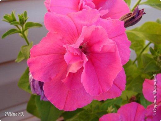 Цветы, как люди, на добро щедры  И, щедро нежность людям отдавая,  Они цветут, сердца отогревая,  Как маленькие теплые костры...  (Ким Жанэ)    фото 4