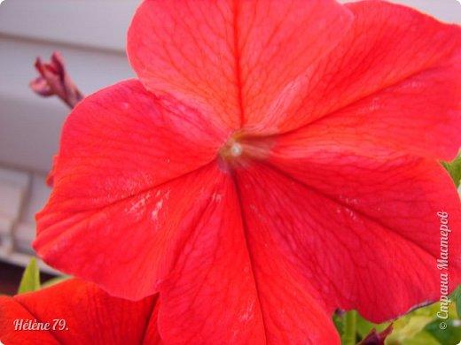 Цветы, как люди, на добро щедры  И, щедро нежность людям отдавая,  Они цветут, сердца отогревая,  Как маленькие теплые костры...  (Ким Жанэ)    фото 2
