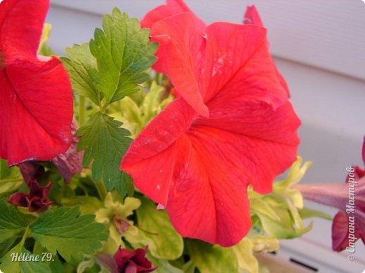 Цветы, как люди, на добро щедры  И, щедро нежность людям отдавая,  Они цветут, сердца отогревая,  Как маленькие теплые костры...  (Ким Жанэ)    фото 3