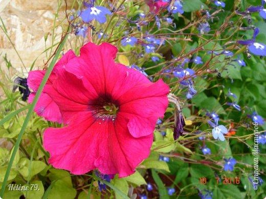 Цветы, как люди, на добро щедры  И, щедро нежность людям отдавая,  Они цветут, сердца отогревая,  Как маленькие теплые костры...  (Ким Жанэ)    фото 7