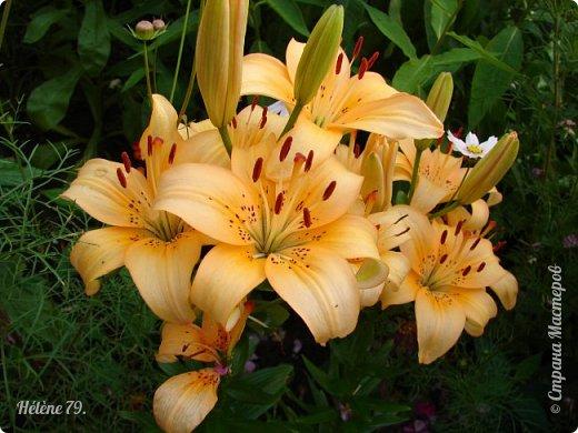 Цветы, как люди, на добро щедры  И, щедро нежность людям отдавая,  Они цветут, сердца отогревая,  Как маленькие теплые костры...  (Ким Жанэ)    фото 24