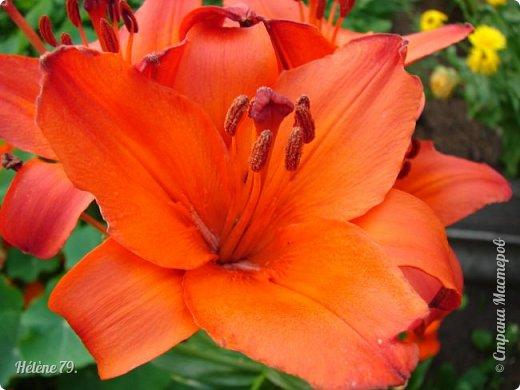 Цветы, как люди, на добро щедры  И, щедро нежность людям отдавая,  Они цветут, сердца отогревая,  Как маленькие теплые костры...  (Ким Жанэ)    фото 22
