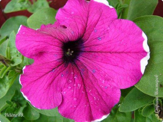 Цветы, как люди, на добро щедры  И, щедро нежность людям отдавая,  Они цветут, сердца отогревая,  Как маленькие теплые костры...  (Ким Жанэ)    фото 6