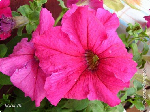 Цветы, как люди, на добро щедры  И, щедро нежность людям отдавая,  Они цветут, сердца отогревая,  Как маленькие теплые костры...  (Ким Жанэ)    фото 5