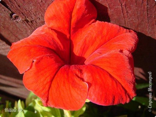 Цветы, как люди, на добро щедры  И, щедро нежность людям отдавая,  Они цветут, сердца отогревая,  Как маленькие теплые костры...  (Ким Жанэ)    фото 1